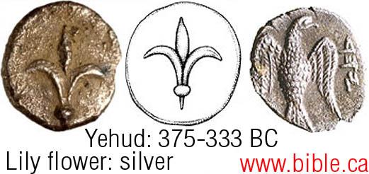 lily-flower-eagle-coin-shoshanah-375-333bc